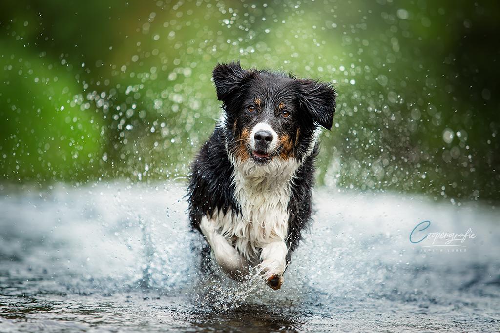 Hund in Bewegung im Wasser
