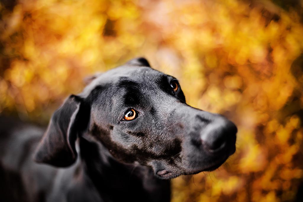 Ein schwarzer Hund schaut hoch in die Kamera, während sich der Hintergrund ganz in Orange gestaltet.