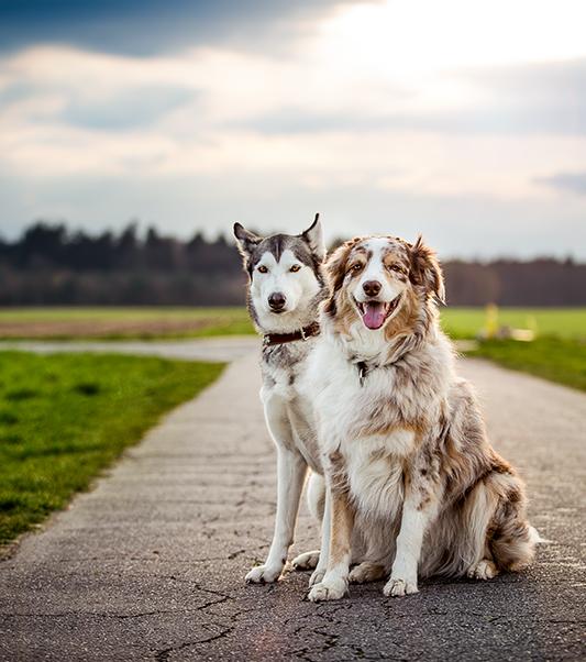 Auf dem Bild sind Cooper und Ellie, meine beiden Hunde, zu sehen. Sie sitzen nebeneinander.