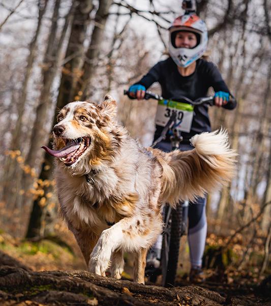 Cooper und ich beim Zughundesport bzw. Dogscooter auf einem Rennen.