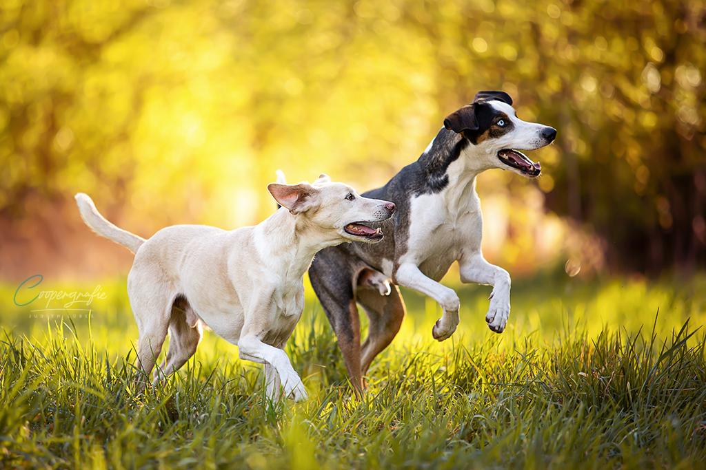 Zwei Hnde springen im Gras fröhlich auf jemanden zu