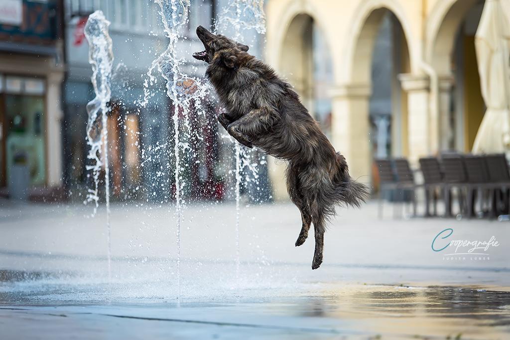 Hund im freien Spiel mit Wasserfontänen