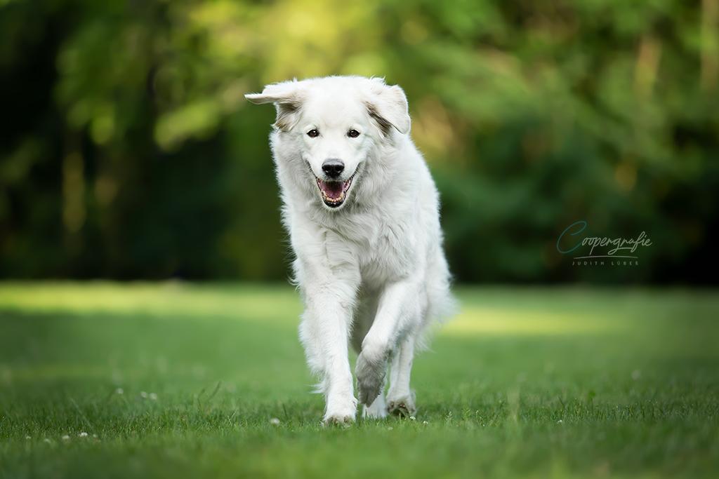 Hunde in Bewegung durch Abruf fotografieren