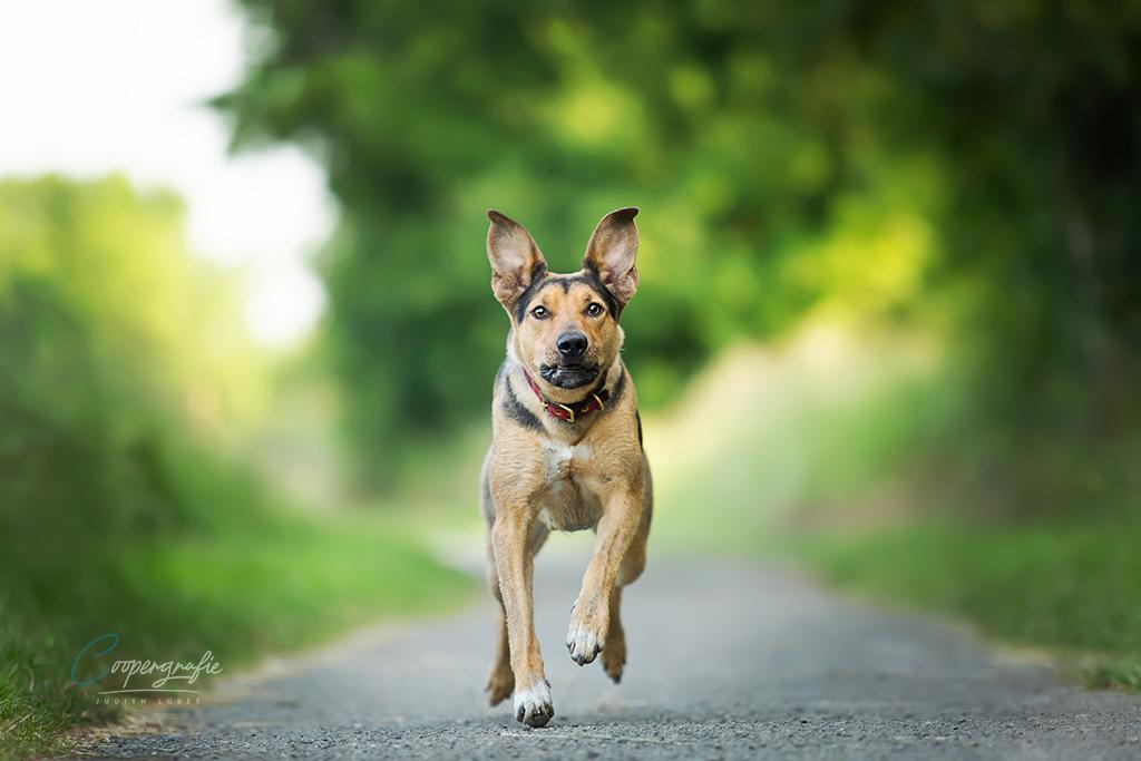 Actionaufnahme - Hund rennt auf die Kamera zu