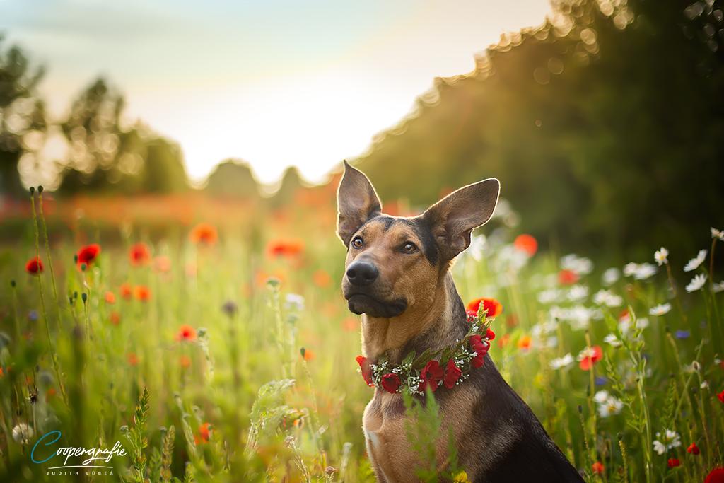 Abendlicht beim Fotoshooting in der Blumenwiese