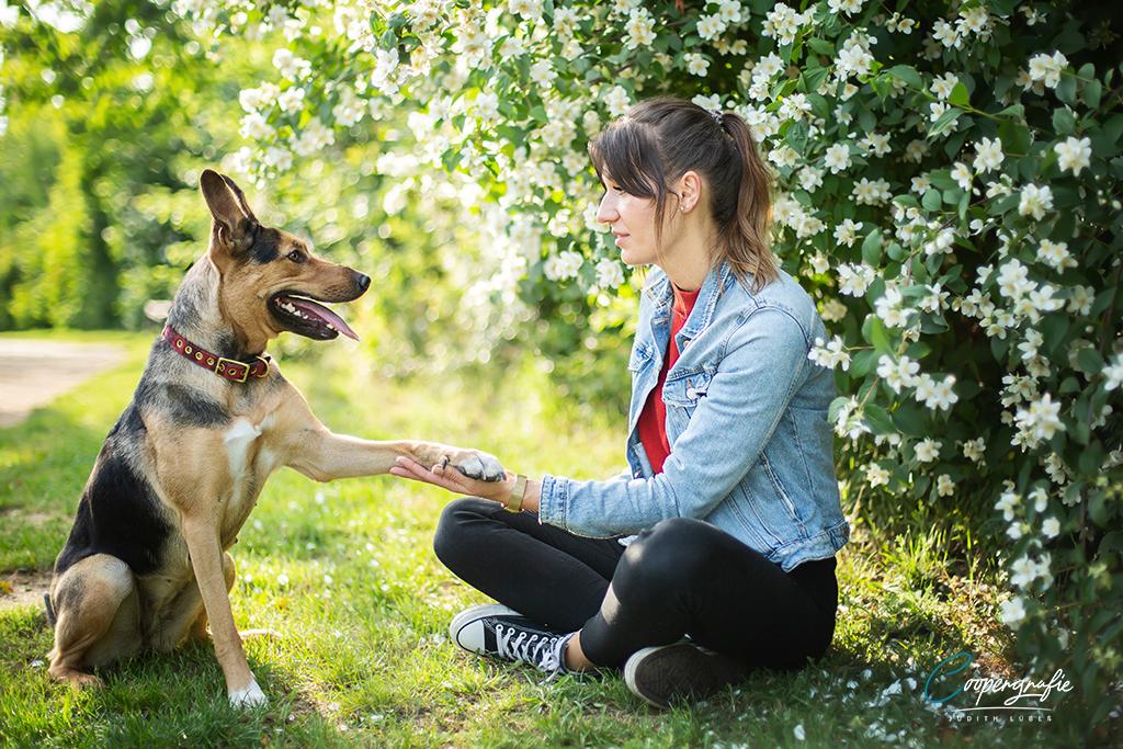 Ein tolles Hund-und-Mensch-Team beim Fotoshooting in der Blumenwiese