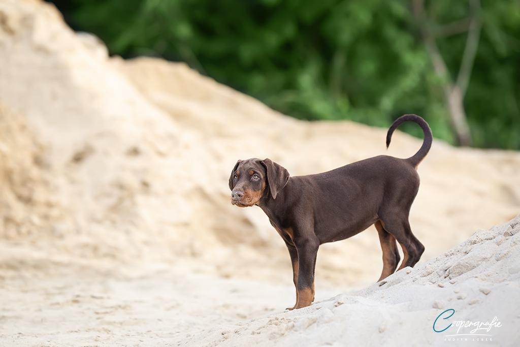 AVA auf einem Sandhügel
